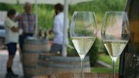 Genussmenschen aufgepasst: Weinprobe in der Pfalz