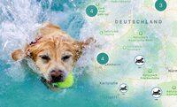 Hundeschwimmen im Freibad