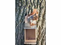 Royal Gardineer Wetterfestes Futterhaus mit Metalldach für Eichhörnchen