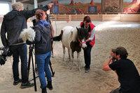 """Pony """"Schnütchen"""" wird TV-Star"""