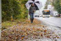 Bürgersteige vom Herbstlaub reinigen: Wer muss kehren?