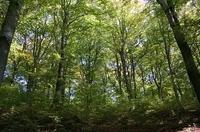 Wälder für Menschen: ForestFinance Kampagnenpartner des Internationalen Jahres der Wälder 2011