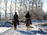 Pferdehaftpflichtversicherung: ein Vergleich, der sich lohnt - Tarife ab 28,32 Euro jährlich