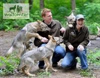 Freizeitpark in Norddeutschland - WOLFCENTER bietet einzigartige Attraktion mit Wölfen