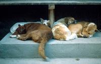 Bund deutscher Tierfreunde e.V. (BdT) bemängelt Verwirrspiel bei Tierheimtransporten