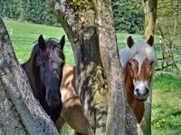 Pferdehaftpflicht: großer Schutz bei kleinen Schäden