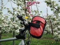 Blütenzauber an der Deutschen Weinstraße  - Hundertausende blühende Obstbäume  beim Radeln und Wandern erleben und genießen