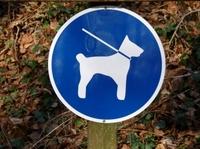Hundehaftpflichtversicherung: Schutz bei unberechtigten Schadensersatzforderungen
