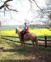 Ausreittip auf www.mit-Pferden-reisen.de: Granderheide - Lütjensee in Schleswig-Holstein