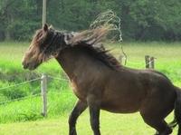 Pferdehaftpflichtversicherung: Oftmals hat der Halter keine Möglichkeit, Schäden zu verhindern