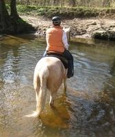 Ausreit- und Urlaubstipp auf www.mit-Pferden-reisen.de: Sachsenwald bei Hamburg