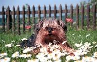 Bund deutscher Tierfreunde: Freiluftabenteuer für Haustiere gefährlich