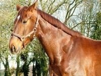Pferdehaftpflicht: Unverzichtbar - vor allem bei großen Schäden