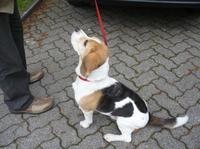 Hundeversicherung wird immer wichtiger: In Wittlich rücken Hundehalter in den Fokus der Polizei