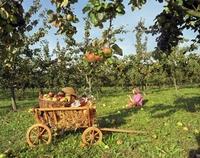 Fruchtbare Rendite mit Obst aus ökologischem Anbau