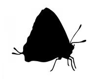 Biologische Mottenbekämpfung mit Schlupfwespen