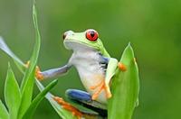Grün, grüner, Costa Rica!
