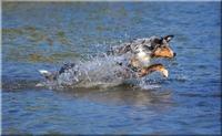 Die Hundekrankenversicherung ist der beste Schutz für den vierbeinigen Freund