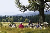 Familien-Ferien-Spaß im Sonnenhotel Bayerischer Hof