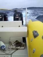"""showimage Aus SeaHelp wird """"DuckHelp"""":  Brütende Ente auf SeaHelp-Ensatzboot avanciert zum Medienstar in Kroatien"""