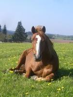 Was eine gute Pferdehaftpflicht ausmacht