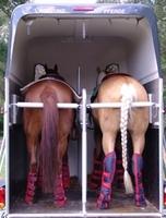 Transportgamaschen beim Pferdetransport – Beinschutz oder Risikofaktor?