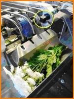 Ultraschallsensoren im Einsatz beim Abpacken von Schnittblumen