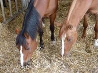 Pferdehaftpflichtversicherung: Ohne Versicherungsschutz kann es teuer werden