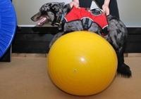 Die Hundekrankenversicherung ist der beste Schutz von klein auf