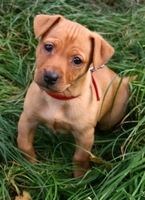Hundehaftpflichtversicherung: nun auch in Hessen in der Diskussion