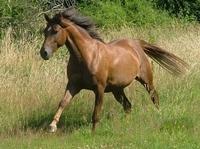 Pferdehaftpflichtversicherung: Wer haftet für den Schaden eines Pferdes?