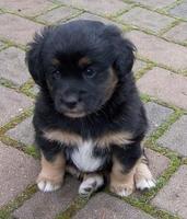 Hundekrankenversicherung: Rund- um-Schutz für den besten Freund des Menschen