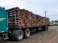 Life Forestry Waldinvestments profitieren von steigenden Holzpreisen