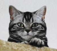 Die Katzen-OP-Versicherung hilft Samtpfötchen wieder auf die Beine