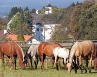 """showimage """"Ich will ein Schloss und ein Pferd!"""""""