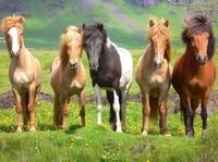 Pferdeversicherung: Schutz im Schadensfall für die vier Hufe
