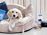 ME Barcelona – Ein Hotelparadies für Hunde mit Anspruch