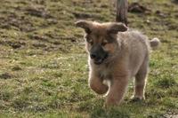 Die Hundehaftpflicht bietet Schutz bei kleinen und großen Schäden