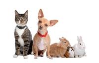 Vivatier Umfrage 2011 – Besser leben mit Haustier
