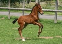 Pferdehaftpflichtversicherung: Schäden können für eine Menge Ärger sorgen