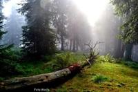 Schachtenwanderung im ArberLand Bayerischer Wald - Nur Träumen ist schöner!