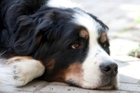 Die Hundehaftpflichtversicherung wird in immer mehr Bundesländern zur Pflicht für Hundehalter