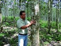 Life Forestry partizipiert an der Innovations- und Wettbewerbsfähigkeit der Schweiz