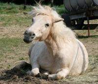 Bei der Pferdeversicherung unbedingt an Mietsachschäden denken