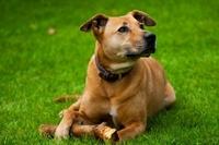 Hundehaftpflicht: Schutz im Schadensfall ist Pflicht in mehreren Bundesländern