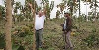 Aktuelle Entwicklung der Life Forestry Teakplantage in Ecuador