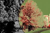 Ein Trackback für einen Baum
