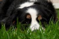 Die Hunde-OP-Versicherung steht für ein langes Hundeleben