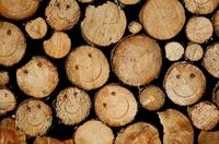 Nachhaltige Direktinvestments in Wald setzen Sachwissen voraus