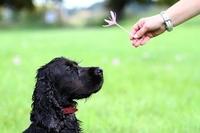 Die verbesserte Hundehaftpflicht - ein Produkt der Rhion und vergleichen-und-sparen.de